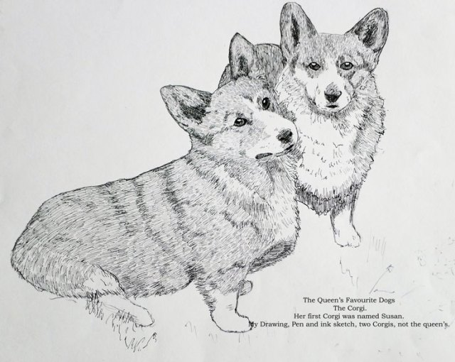 drawing pen and ink of two corgis
