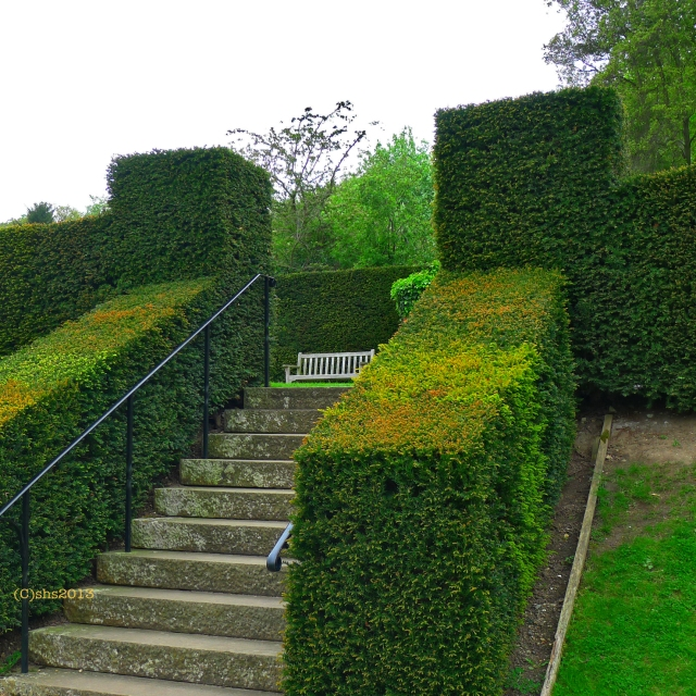 Photograph of a formal hedge at Chartwell Kent by susan sheldon nolen