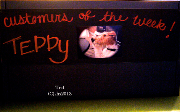 Photograph of susan sheldon nolen's wire fox terrier teddy making starbucks customer of the week