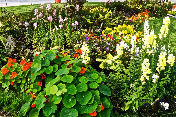 garden photo by susan sheldon nolen (C) 2013