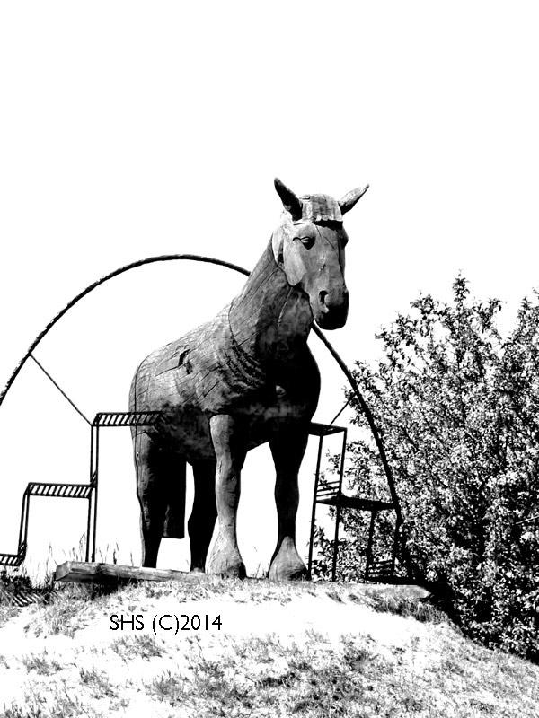 Susan Sheldon's photograph of a wooden horse