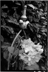 susan sheldon's garden bird