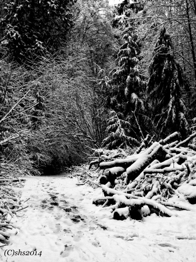 Winter Trees Black and White Photograph by Susan Sheldon Nolen