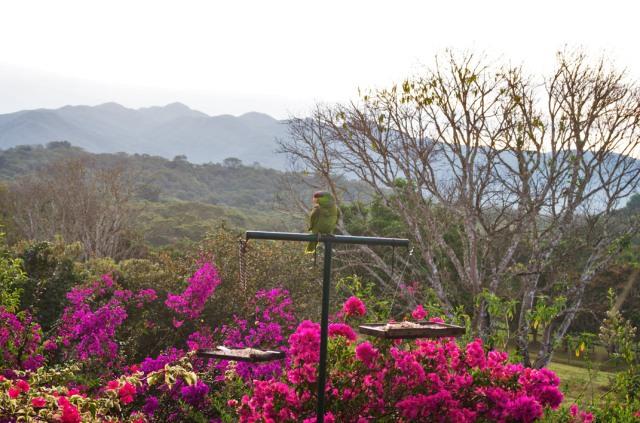 Susan Nolen's photograph of a Parrot