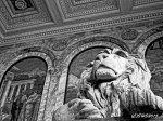 Susan Nolen's Photograph of the Lion in the Boston Library